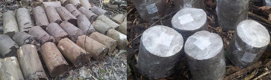 Геология в Киеве фото. Монолиты (Пробы грунта ненарушенной структуры)
